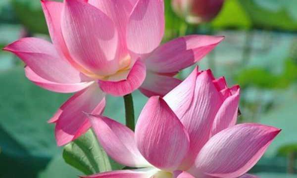 Khám phá vẻ đẹp và ý nghĩa quốc hoa của các nước trên thế giới